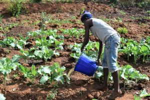 The Water Project:  Watering Crops With Water From The Dam