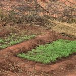The Water Project: Maluvyu Community D -  Garden Near The Dam And Well