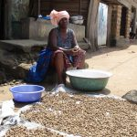 The Water Project: Lungi, Masoila, #3 Kamara Street -  Drying Groudnuts