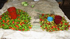 The Water Project:  Peppers For Sale
