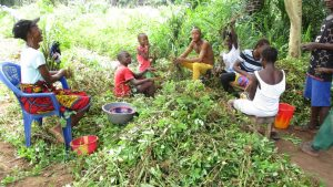 The Water Project:  Community Members Harvesting Groundnuts