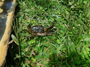 The Water Project:  Crab Found At The Spring