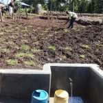 The Water Project: Bungaya Community, Charles Khainga Spring -  Grass Planting