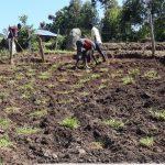 The Water Project: Bungaya Community, Charles Khainga Spring -  Fencing Around The Springbox