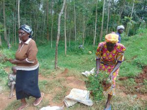 The Water Project:  Women Delivering Grass For Planting At The Spring Site