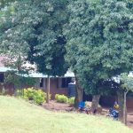 The Water Project: Kapsaoi Primary School -  Trees Line The Classroom Buildings