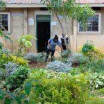 The Water Project: Kinu Friends Secondary School -  School Flower Farm