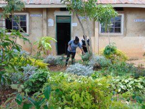 The Water Project:  School Flower Farm