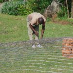 The Water Project: Gimariani Secondary School -  Preparing The Domes Wire Form
