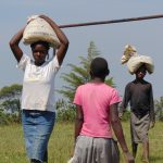 The Water Project: Gimariani Secondary School -  Students Bringing Bags Of Cement To The Construction Site