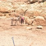 The Water Project: Kasioni Community C -  Donkeys For Carrying Water Home