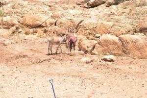 The Water Project:  Donkeys For Carrying Water Home