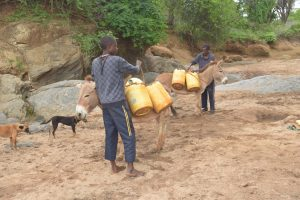 The Water Project:  Loading Up Donkeys