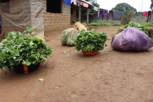 The Water Project:  Potato Leaves And Cassava Leaves Set For Sale