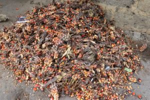 The Water Project:  Palm Kernel Set For Palm Oil Processing