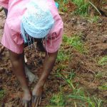 The Water Project: Masuveni Community, Masuveni Spring -  Community Member Helps Plant Grass