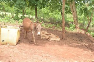 The Water Project:  Donkey