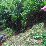 The Water Project: Kisasi Community, Edward Sabwa Spring -  Site Clearance Begins