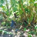 The Water Project: Buyangu Community, Mukhola Spring -  Site Clearance Before Excavation