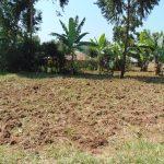 The Water Project: Jimarani Primary School -  School Farm