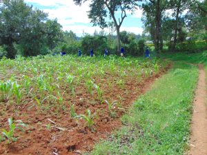 The Water Project:  Community Farm On Walk From Spring