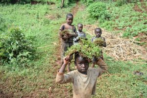The Water Project:  Children Carry Grass To Be Planted At The Spring