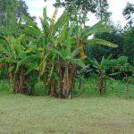 The Water Project: Galona Primary School -  School Garden