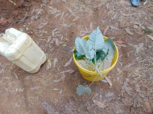 The Water Project:  Leave The Leaves Out Water Handling Session