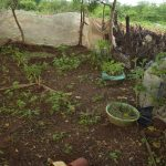 The Water Project: Kathamba ngii Community B -  Garden