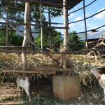 The Water Project: Yumbani Community A -  Animal Pen