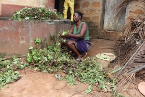 The Water Project:  Woman Cutting Potato Leaves Stem Fot Plating