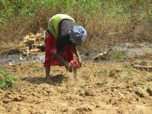 The Water Project:  Old Woman Planting
