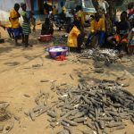 The Water Project: Lokomasama, Gbonkogbonko Village -  Children Peeling Cassava Root