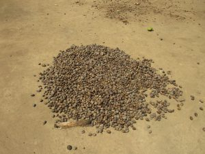 The Water Project:  Palm Kernel