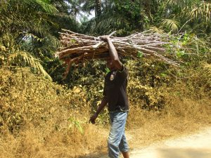 The Water Project:  Young Man Carrying Cassava Leaves Stems To Farm House