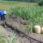 The Water Project: Bukhaywa Community, Shidero Spring -  Digging Drainage Channel