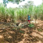 The Water Project: Namarambi Community, Iddi Spring -  Building The Fence