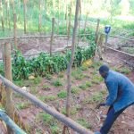 The Water Project: Imusutsu Community, Ikosangwa Spring -  Grass Planting