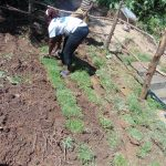 The Water Project: Mukangu Community, Metah Spring -  Grass Planting