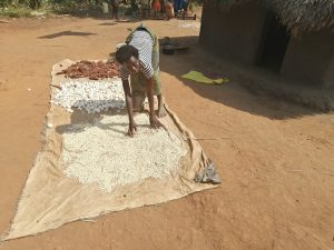 The Water Project:  Drying Millet And Corn