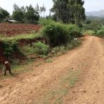 The Water Project: Harambee Community, Elijah Kwalanda Spring -  Goats Tied To Graze Along Road To The Community