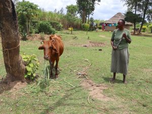 The Water Project:  A Woman Grazes Her Cow
