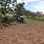 The Water Project: Mahira Community, Jairus Mwera Spring -  Farming