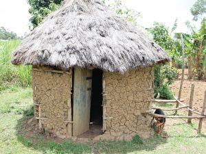 The Water Project:  Calves House