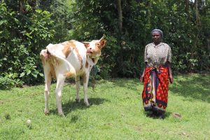 The Water Project:  A Woman Poses With Her Cow