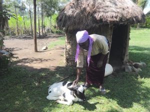 The Water Project:  Agnes Petting Her Calf