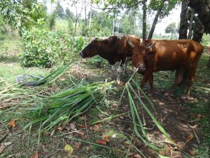 The Water Project:  Animals Grazing