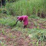 The Water Project: Mahira Community, Wora Spring -  Farming