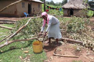 The Water Project:  Collecting Cow Dung