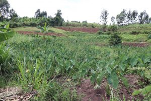 The Water Project:  Arrowroot Farm